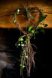 Ivy in Heart Shape  United Kingdom  Europe