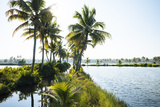 Backwaters Near North Paravoor  Kerala  India  South Asia