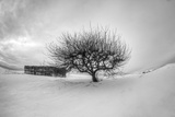 Washington  Apple Tree and Hay Bales in Winter with Storm Clouds