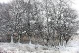 A Wintry Landscape on the Mynydd Epynt Moorland  Powys  Wales  United Kingdom  Europe