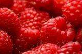 USA  Oregon  Keizer  Locally Grown Raspberries