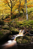 Padley Gorge  Peak District  Derbyshire  England  United Kingdom  Europe