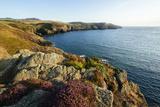 Strumble Head  Pembrokeshire Coast National Park  Wales  United Kingdom  Europe