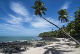 Palm Tree on a White Sand Beach on Saint Joseph Island  French Guiana  Department of France