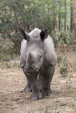 Ithuba  Thula Thula Rhino Orphanage  Kwazulu-Natal