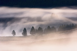 Misty Dawn over Hayden Valley  Yellowstone National Park  Wyoming  United States of America