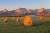 Hay Bales in a Field with the Rocky Mountains in the Background  Near Twin Butte  Alberta  Canada