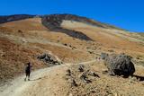 Teide National Park  Tenerife  Canary Islands  Spain  Europe