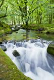 River Fowey  Goliath Falls  Looe  Cornwall  England  United Kingdom  Europe