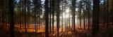 Moreton Forest  Dorset  England  United Kingdom  Europe