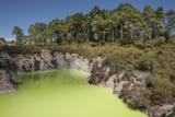 The Devil's Bath  Waiotapu Goethermal Wonderland  Rotorua  New Zealand  Oceania