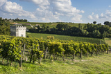 View over the Vineyards  St Emilion  Gironde  Aquitaine  France