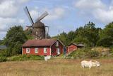 Sunvara Kvarn Windmill  Sunvara  Near Varobacka  Halland  Southwest Sweden  Sweden  Scandinavia