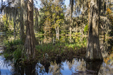 Swampy are in the Magnolia Plantation Outside Charleston  South Carolina  United States of America