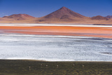 Flamingos at Red Lagoon (Laguna Colorada)  Bolivia