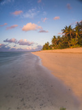 Tropical Beach with Palm Trees at Sunrise  Rarotonga  Cook Islands  South Pacific  Pacific