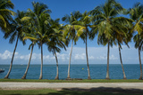 Palm Tree Line  Royal Island  Iles Du Salut  Devils Island  French Guiana  Department of France
