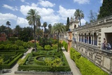 Courtyard Gardens  Alcazar  UNESCO World Heritage Site  Seville  Andalucia  Spain  Europe
