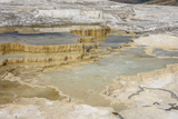 Canary Spring  Travertine Terraces  Mammoth Hot Springs  Yellowstone National Park  Wyoming  USA