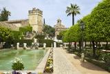 Gardens in Alcazar  Cordoba  Andalucia  Spain  Europe