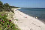 View Along Pine Tree Lined Beach  Nybrostrand  Near Ystad  Skane  South Sweden  Sweden  Scandinavia