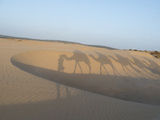 Essaouira Beach Camel Shadows  Morocco  North Africa  Africa