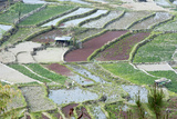 Mixed Paddy Fields Growing Vegetables under Highly Efficient Jhum System of Slash and Burn  India