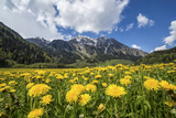 Spring Flowers and Green Meadows  Bregaglia Valley  Engadine