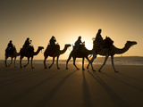 Beach Camel Trek  Essaouira  Morocco  North Africa  Africa