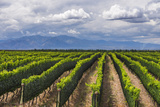 Vineyards in the Uco Valley (Valle De Uco)  a Wine Region in Mendoza Province  Argentina