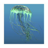 Green Jellyfish Illustration
