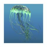 Green Jellyfish Illustration