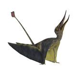 Rhamphorhynchus Pterosaur