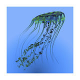 A Green and Blue Jellyfish Illustration