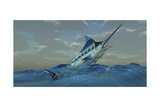 A Blue Marlin Bursts from Ocean Waters