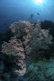 A Huge Gorgonian Grows on a Reef in Komodo National Park  Indonesia