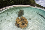 Giant Clams Grow in Shallow Water in Raja Ampat  Indonesia