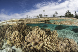 A Healthy Coral Reef Grows in the Solomon Islands