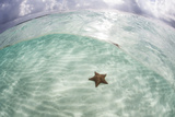 A West Indian Starfish on the Seafloor in Turneffe Atoll  Belize