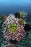 A Large Barrel Sponge Covered with Crinoids