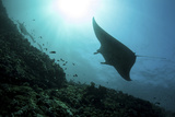 A Manta Ray Swims Through a Current-Swept Channel in Indonesia