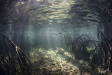 Beams of Sunlight Shine Down into a Mangrove Forest