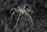 A Sea Spider Crawls Along the Mucky Seafloor