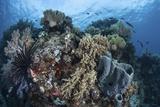 Reef-Building Corals in Raja Ampat  Indonesia