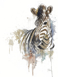 Water Zebra