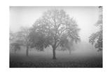 Owl'S Head Park Trees Fog 2