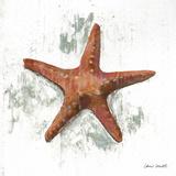 Starfish on White II