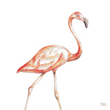 Flamingo Duo Square I