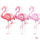 Flamingo Trio II