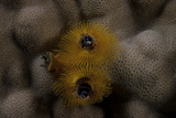 Close-Up of a Yellow Christmas Tree Worm